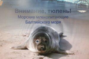 Акция Внимание тюлень
